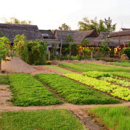 Hoi An countryside